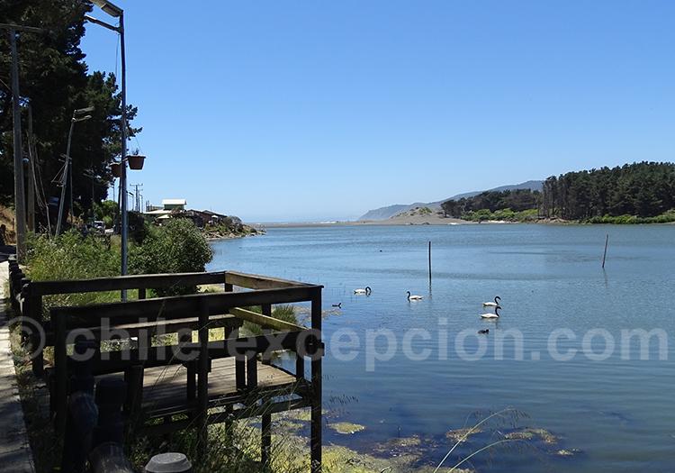 Laguna Torca, Region del Maule, province de Curico