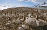 Paysage d'Antarctique. ©Alex Benwell