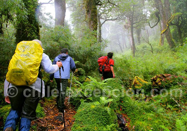 Randonnée à Puyuhuapi