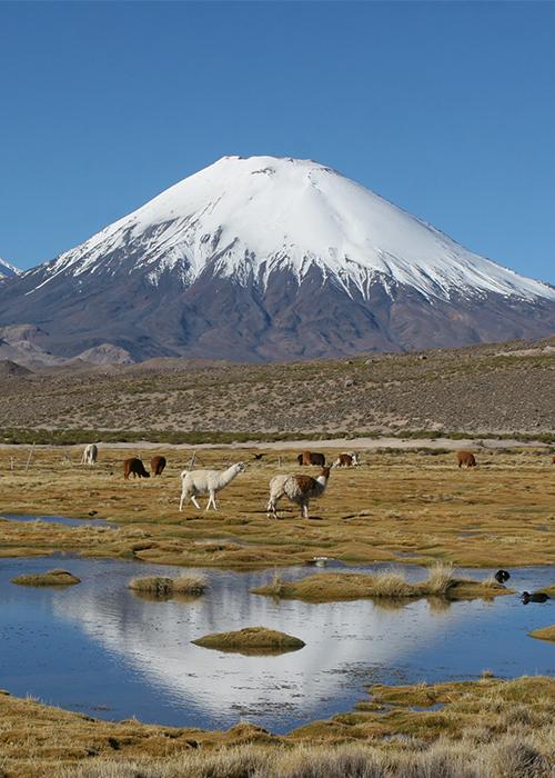 Parcs du Nord Chili, désert et Altiplano