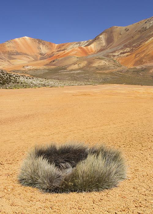 Les autres espèces de plantes du Chili