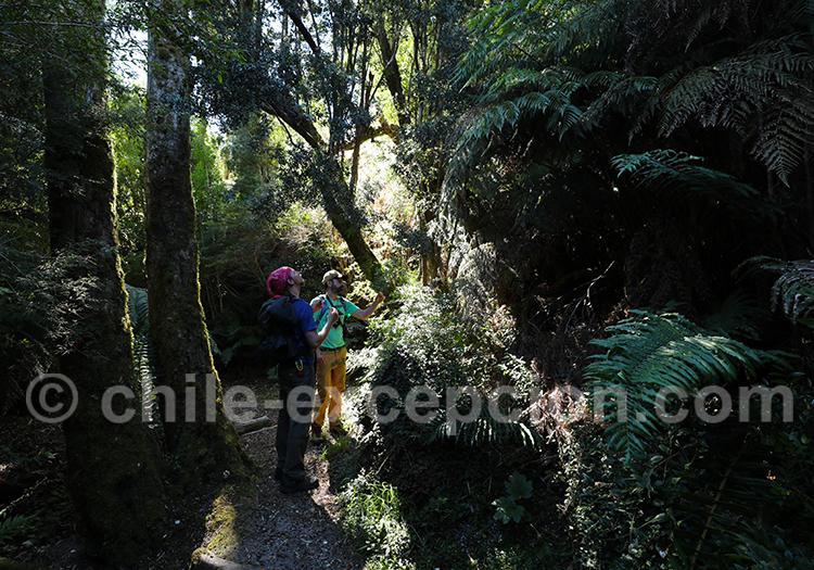 Randonnée parc Pumalin, Patagonie