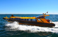 Excursion nautique île Magdalena
