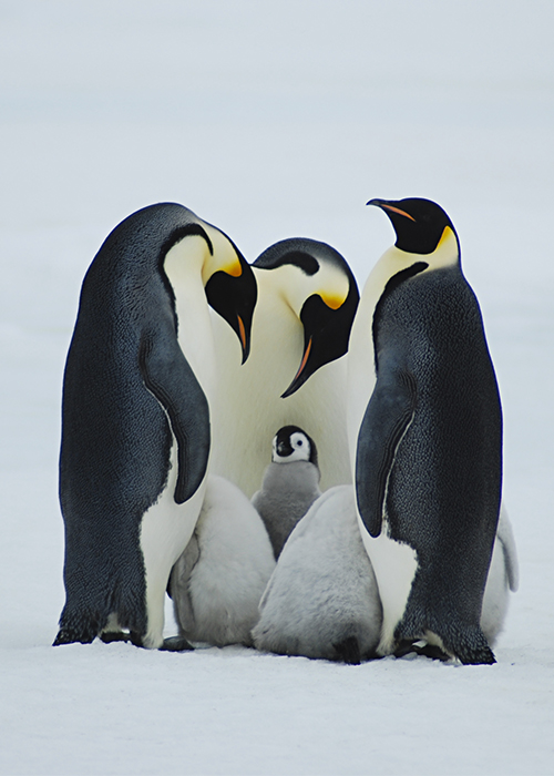 Faune Antarctique