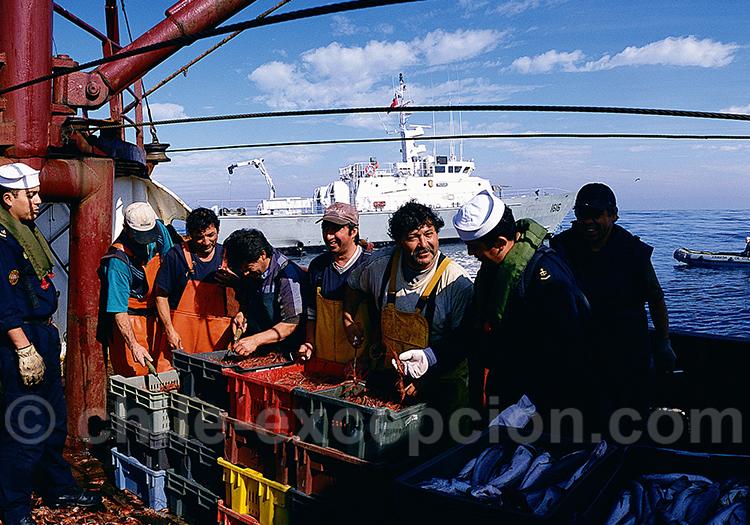 Industrie de la pêche au Chili