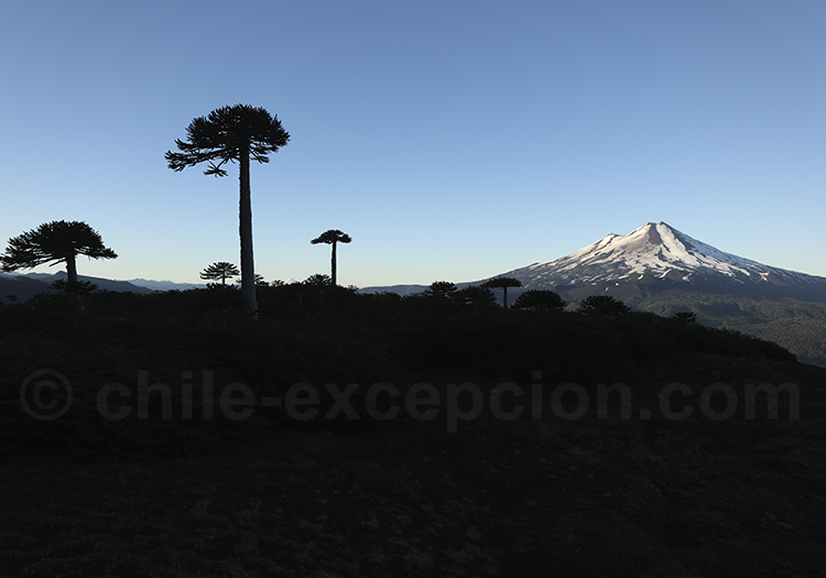 Randonnée Sierra Nevada, Conguillio