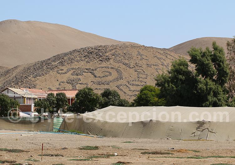 Visite des géoglyphes du Cerro Sagrado, Arica