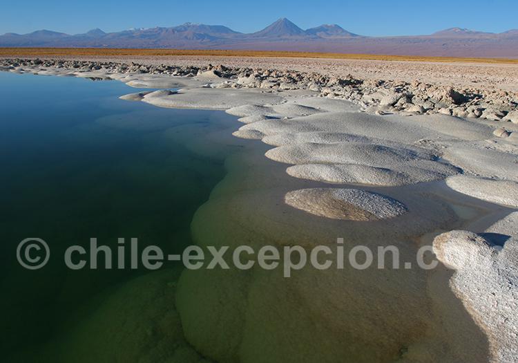 Excursion laguna Cejar