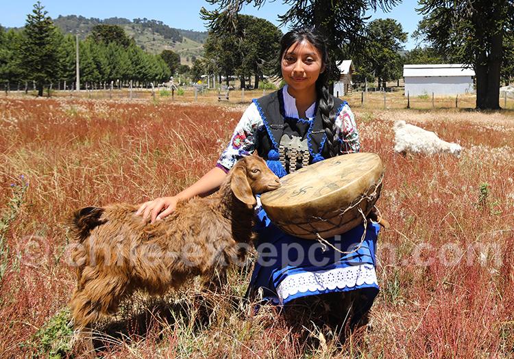 Rencontre mapuche à Icalma