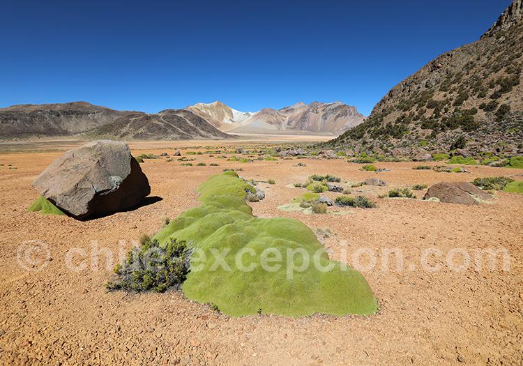 Excursion Nevados de Suriplaza