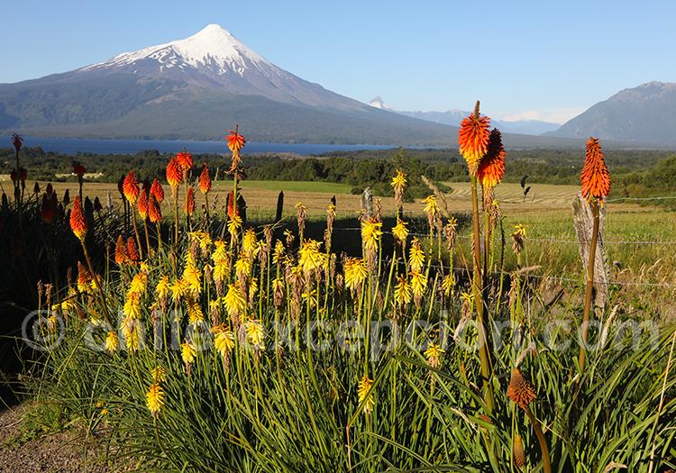 Excursion autour du volcan Osorno