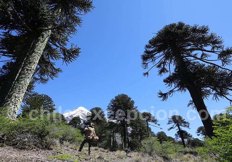 Excursion Mamuil Malal, volcan Lanin