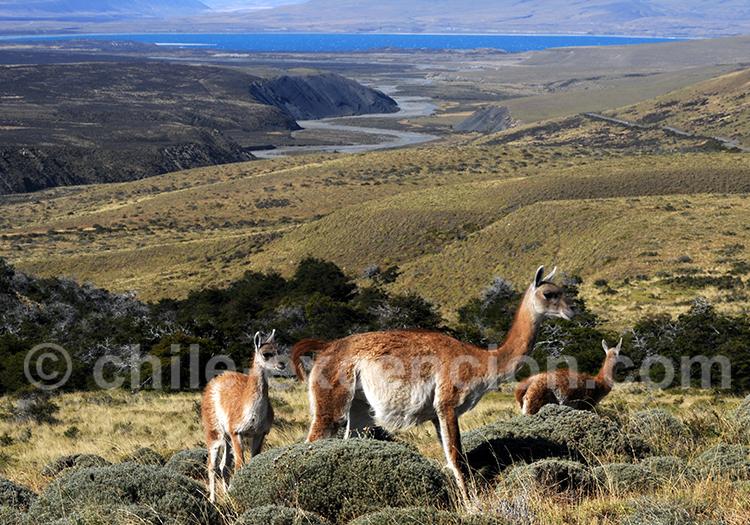 De El Calafate à Punta Arenas