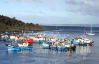 L'activité de pêche à Punta Arenas