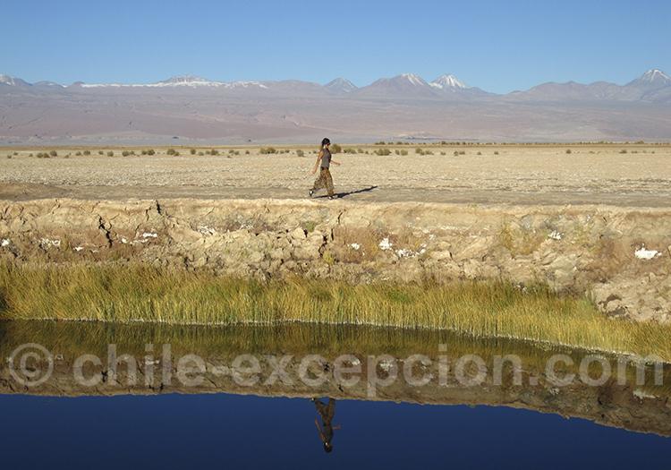 Lagune Tebinquiche, salar d'Atacama
