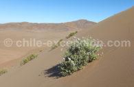 Le désert Fleuri, Copiapó
