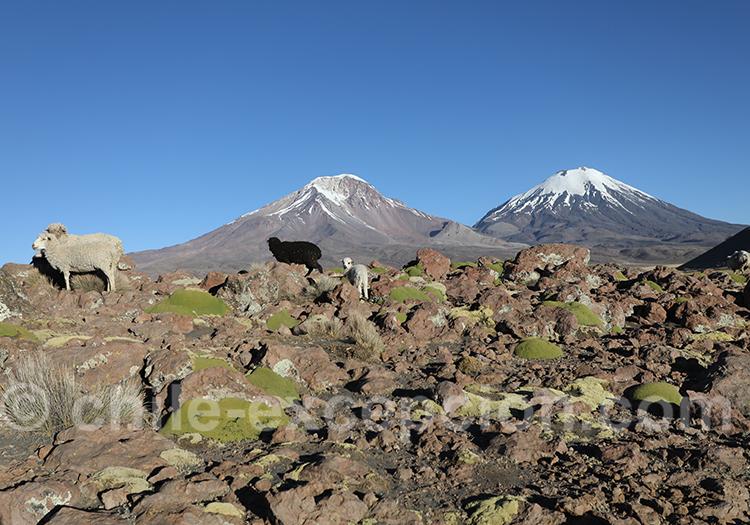 Nevados Payachatas, Chili