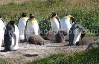 Parc Pingüino Rey