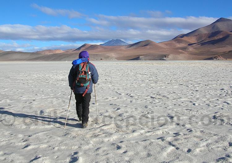 Parc national Nevado tres Curces, salar de Maricunga