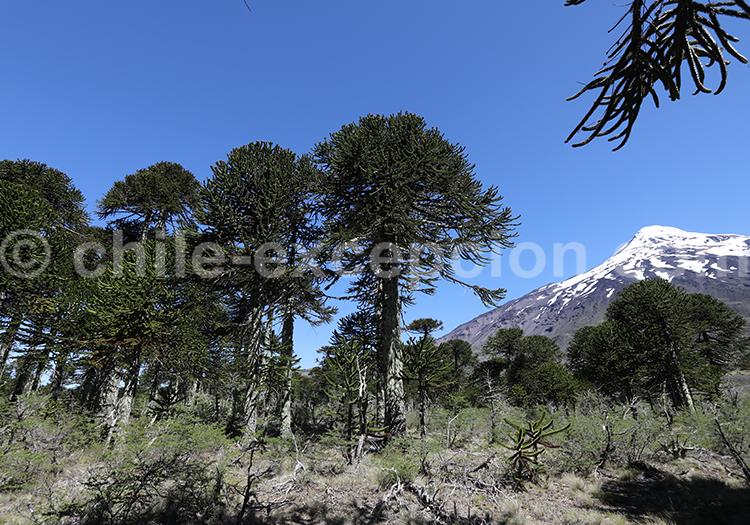 Réserve nationale Villarica