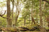Réserve Forestal Maganalles