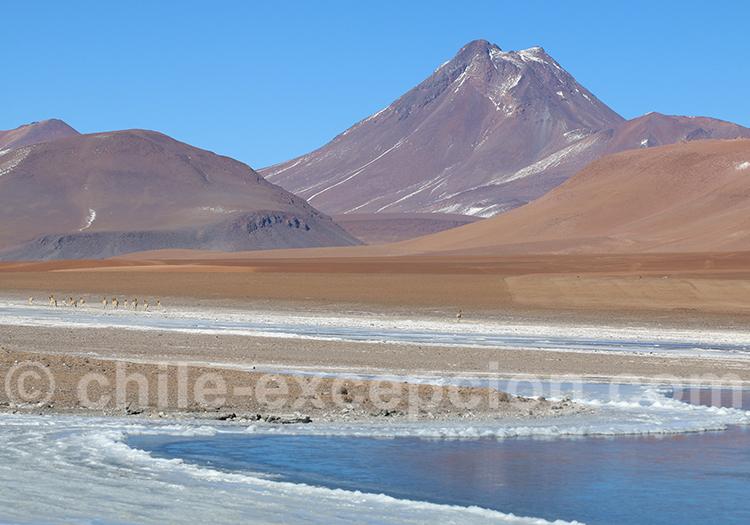 Volcan Acamarachi ou Pili