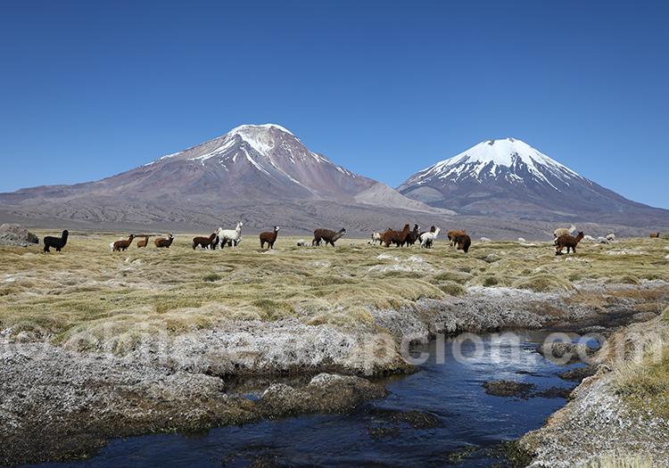 Volcan Payachatas (Pomerape & Parinacota)