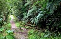 Parc national Alerce Andino
