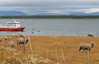 Se rendre à Puerto Natales