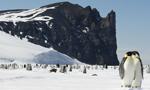 Croisière Antarctique: Péninsule Antarctique et Cercle Antarctique ©David McEown