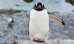 Vol Croisière Antarctique