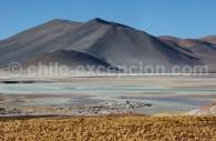 Salar de Talar, route du Paso de Sico