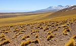 Flore Chili: autres variétés chiliennes