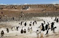 Baie des Baleines, découverte: 1911 par Roald Amundsen, Antarctique. ©Dan Leeth