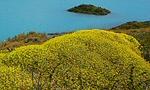 Flore Chili: arbustes et buissons