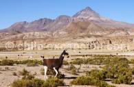 Cerro Chorolque, 5.800 mètres. Bolivie.