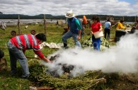 Préparation du curanto, Pangue, Chiloé. Crédit Pedro Alvarado