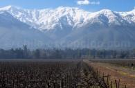 Viña Cousiño Macul, vallée del Maipo
