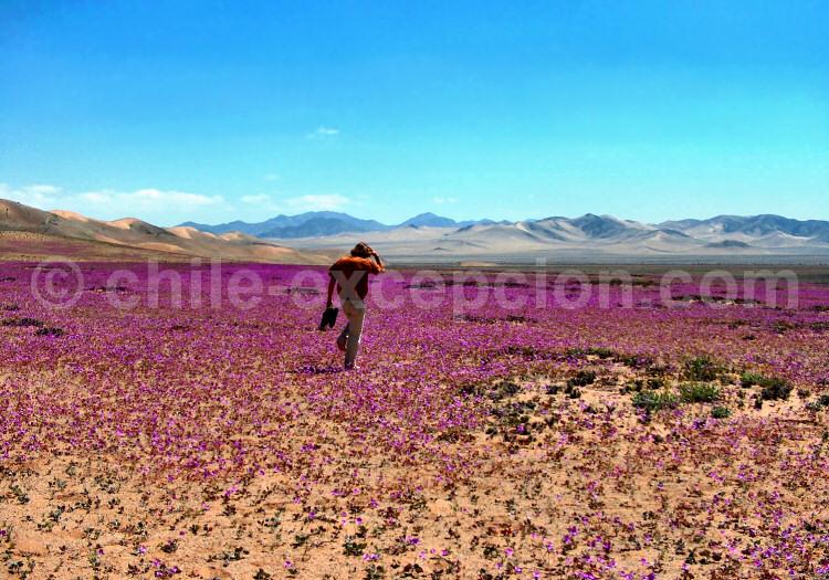 Parc national Llanos de Challe