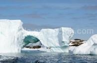 Icebergs, Antarctique. ©Caroline Modolo