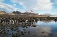 Fortuna Bay, sur l'île de la Géorgie du Sud, Antarctique. ©Peter Akers