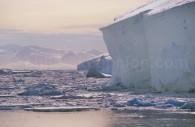 Icebergs et Glaciers, Antarctique. ©Alex Benwell