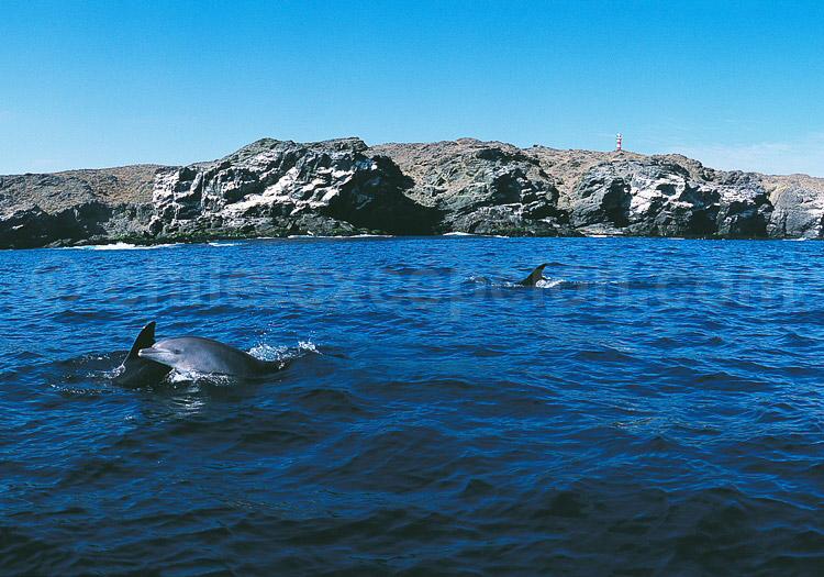 Grand Dauphin au Chili