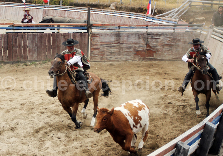 Championnat de rodéo de Rancagua