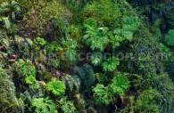 Vegetation (Nalcas y Helechos) sur le río Fuy, salto del Huilo Huilo