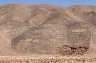 Géoglyphes de Pintados, Réserve nationale Pampa del Tamarugal