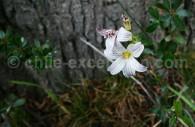 Iris - crédit Pascale Pengam