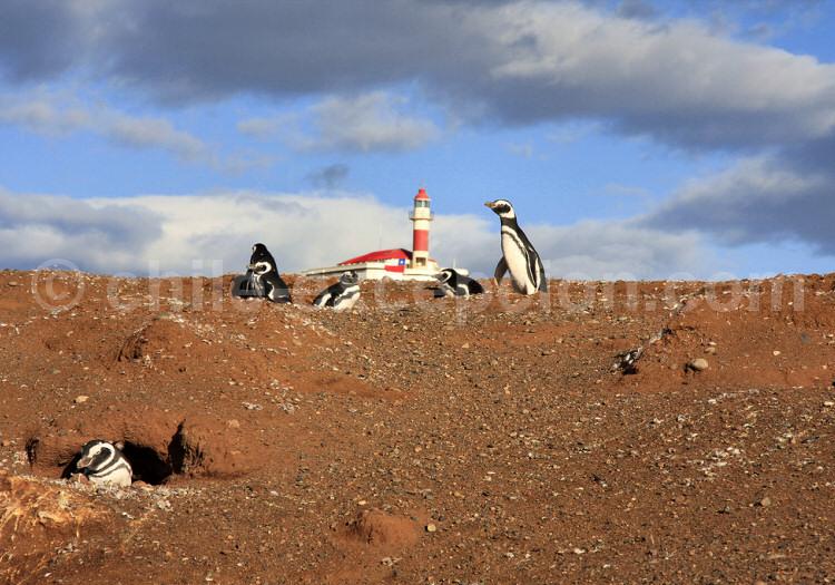Monument naturel Los Pingüinos