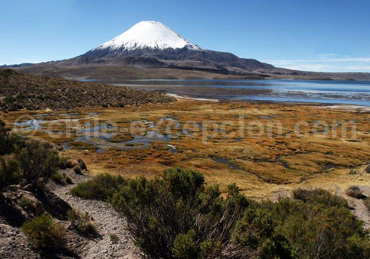 Volcan Parinacota, lac Chungará, Parc national Lauca