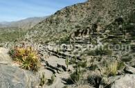 Ruines de Quilmes, province de Tucumán